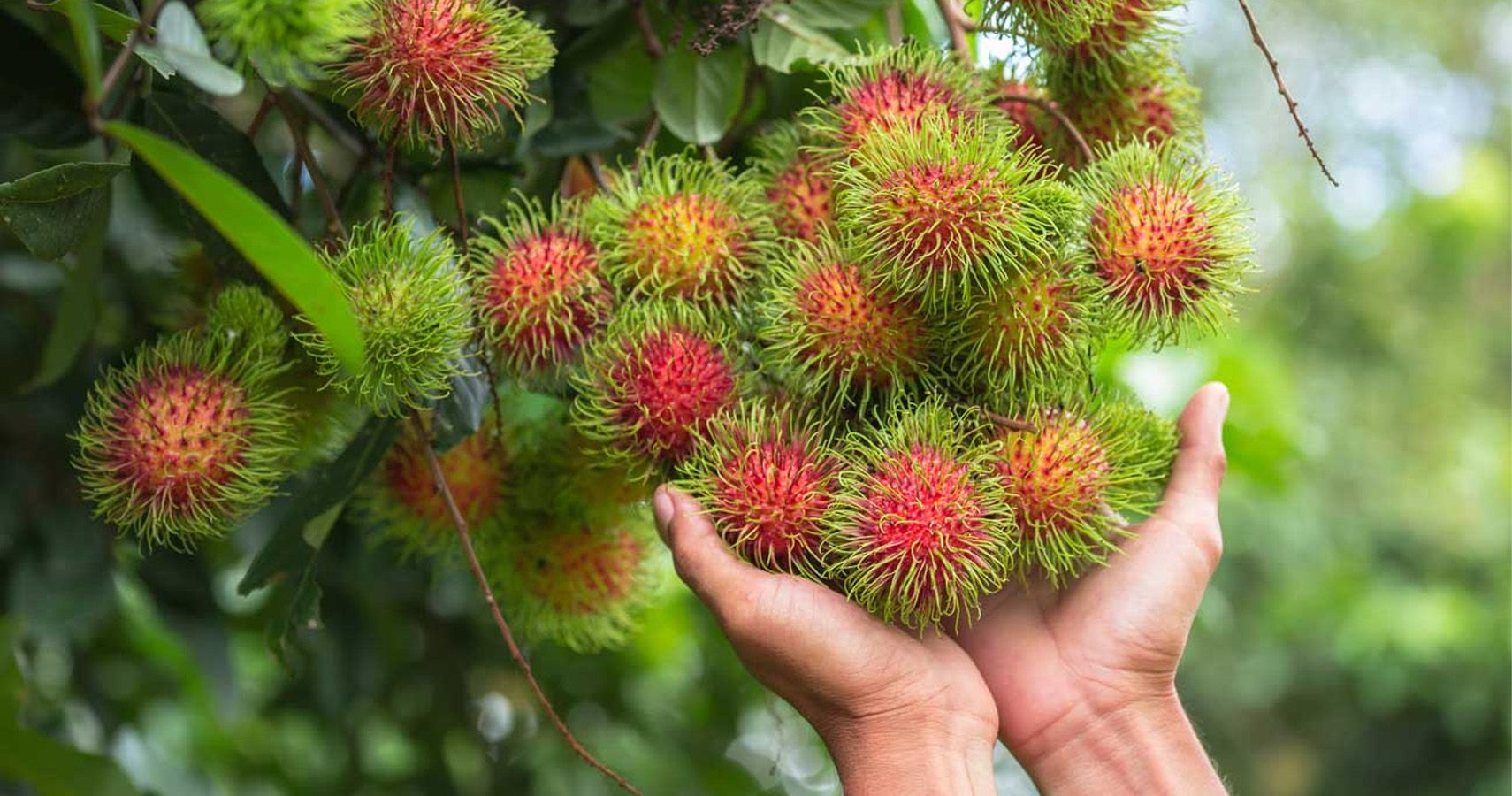 25 Weird Exotic Fruits You Won't Be Seeing At The Grocery ...